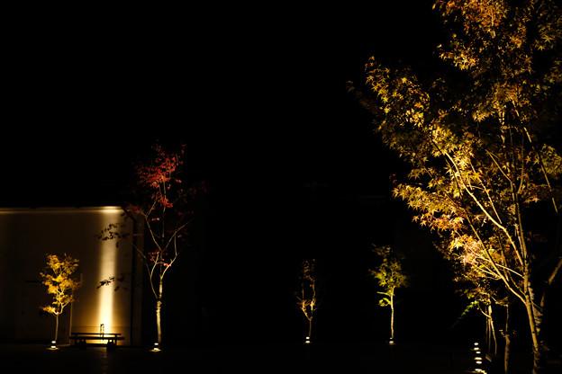 Photos: 夜の高山-0466