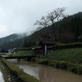 Photos: 一乗谷 朝倉館 門-0251