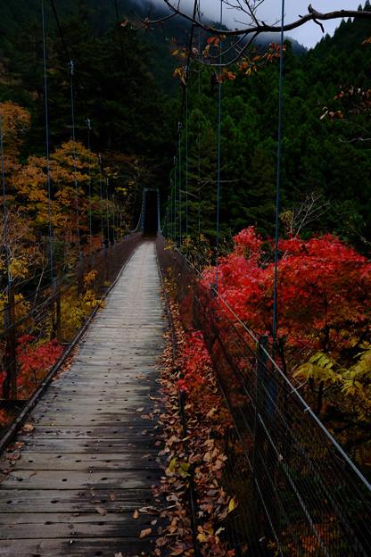 吊り橋-5318
