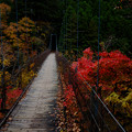 Photos: 吊り橋-5318