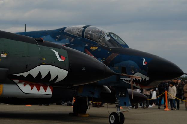 F4 Shark-0671