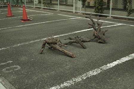 流木駐車-0058