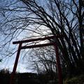 Photos: 鉢形城 鳥居-1147
