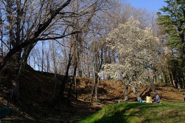 鉢形城 お花見-1143