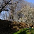 Photos: 鉢形城 お花見-1143