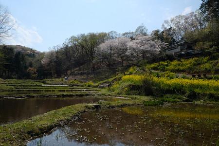 ホタルの住む池-1199