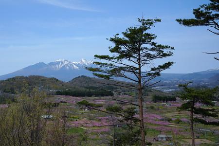 新府城から見る桃源郷-1459