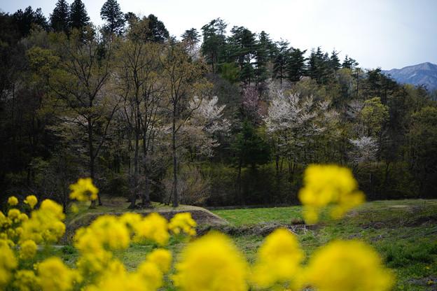 新府城の春-1446