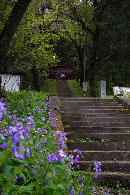新府城本丸への階段-1475