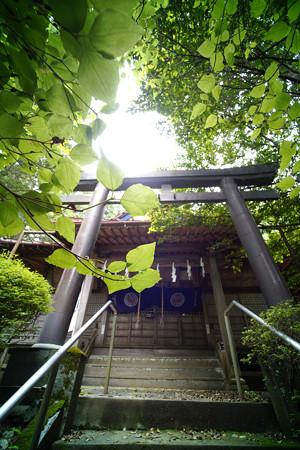 朝日稲荷神社 拝殿-1628