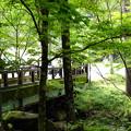 Photos: わらび餅 はまやらわ-1814