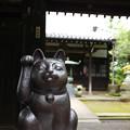 豪徳寺 01 招き猫-1762