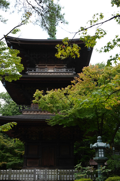豪徳寺 02 三重塔-1761