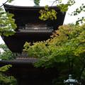 Photos: 豪徳寺 02 三重塔-1761