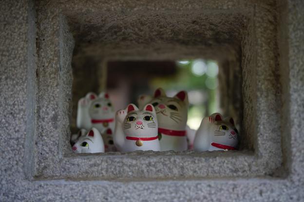 Photos: 豪徳寺 ソーシャルディスタンス-1766