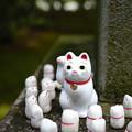 Photos: 豪徳寺 みんなあつまれ-1765