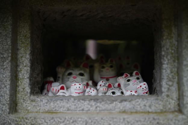 Photos: 豪徳寺 密空間-1767