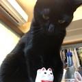 Photos: 招き猫 vs ポンちゃん