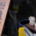 Photos: 豪徳寺の猫たち~支度中~-1808