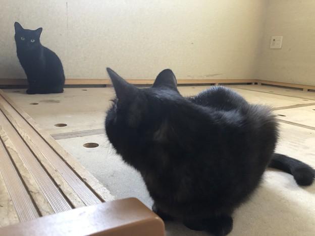 Photos: ハッ!