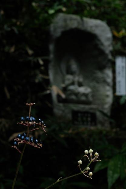 Photos: 大悲願寺の実-1534
