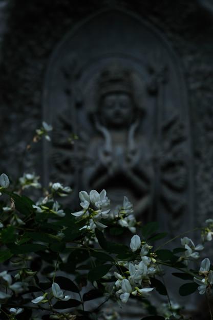 Photos: 大悲願寺の白萩-1541