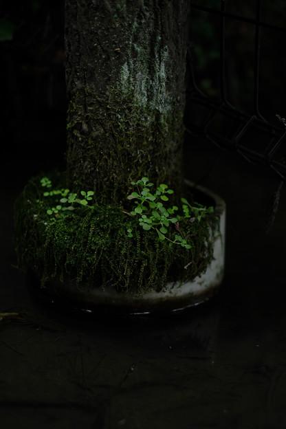 大悲願寺の池-1535