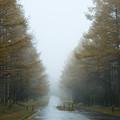 八ヶ岳高原の黄葉-1728