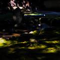 Photos: 恵林寺 Green Spot-1567