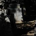 恵林寺 木漏れ日-1561