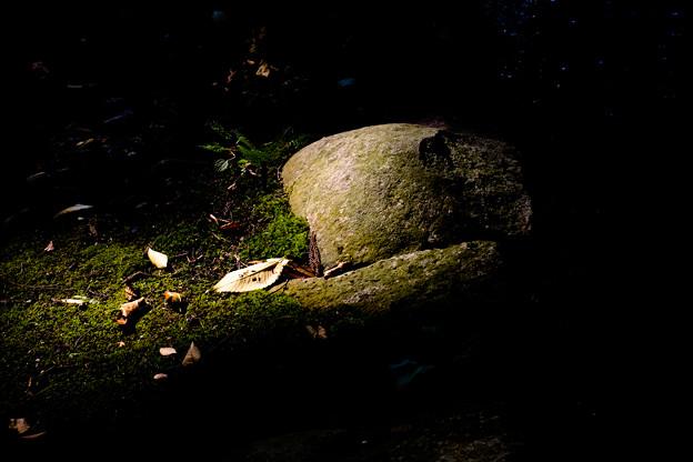 Photos: 恵林寺 落ち葉-1570