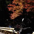Photos: 紅葉とSR-2054