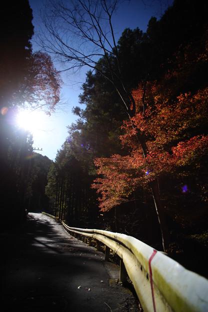 檜原村 ガードレール-2049