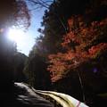 Photos: 檜原村 ガードレール-2049