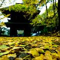 広徳寺_山門と銀杏-1839