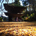 Photos: 広徳寺_山門と銀杏の絨毯-2020