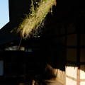 Photos: 広徳寺 草生茂る屋根-1832