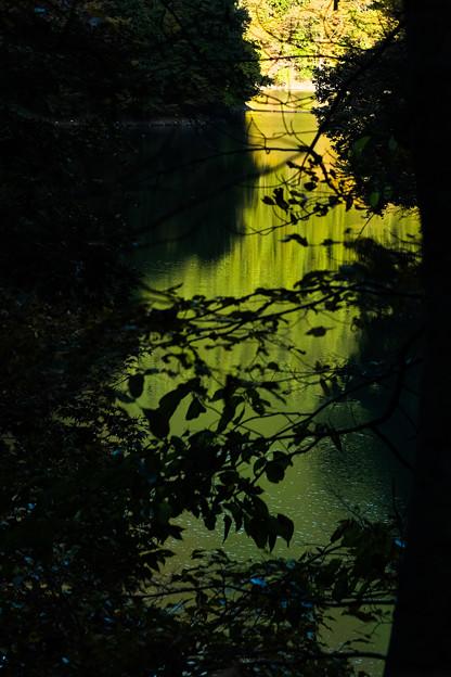色づく奥多摩湖-1630