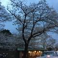 Photos: 撮って出し。。横浜みなとみらいを走行。。(^^) 4月6日
