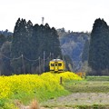 Photos: 撮って出し。。千葉県いすみ鉄道周辺の菜の花は満開(^^) 4月10日
