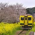 撮って出し。。千葉県いすみ鉄道 桜はまだ菜の花満開(^^)4月10日