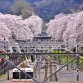 撮って出し。。千葉県から神奈川県山北町へ移動こちらは桜満開4月10日