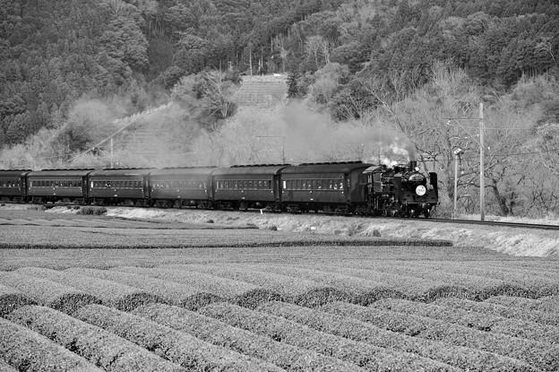 モノクロの風景。。大井川鐵道SL 茶畑と田園