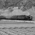 Photos: モノクロの風景。。大井川鐵道SL 茶畑と田園