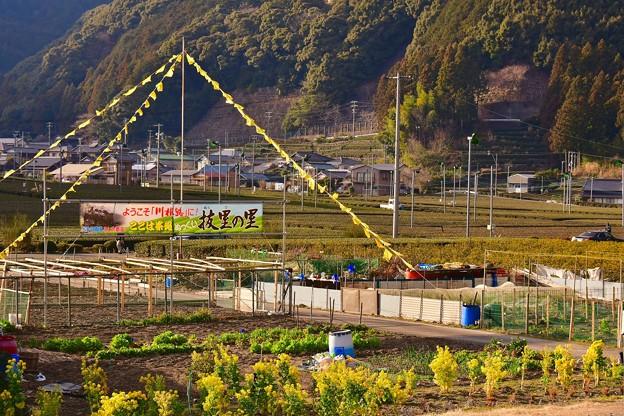 大井川鐵道 抜里駅周辺の風景。。(^^)