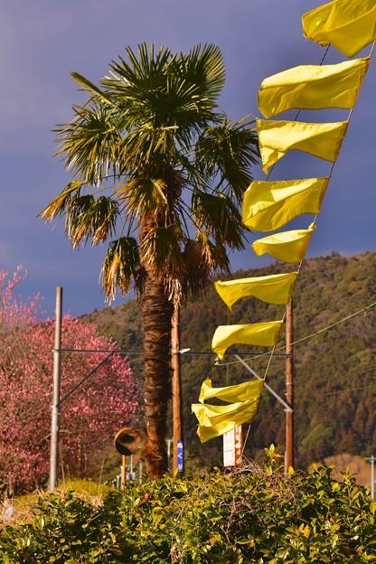 大井川鐵道 抜里駅 幸せの黄色い旗。。(^^)