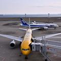 朝の羽田空港第二。。C-3POJETとB787。。20170325