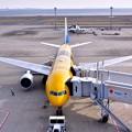 背中まで黄色い機体。。ANA C-3POJET 。。20170325
