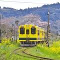 黄色い列車いすみ鉄道200形。。20170410