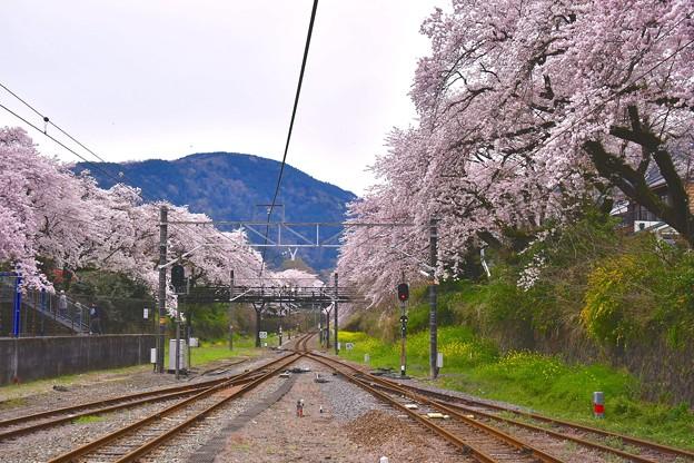 今年は山北町へ。。駅ホームから見れる桜の木。。20170410